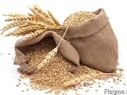 Оптовые закупки зерновых и масличных культур