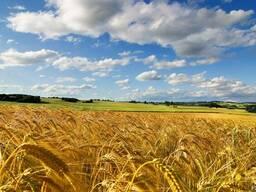 Купим сг земли ,агрофирму ,колхоз