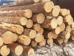 Купимо необроблену деревину (кругляк) - сосна!