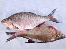 Свіжа річкова риба. Карась, густера, синець, плотва, лящ і і