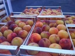 Купить ящики для персика в крыму от производителя