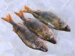 Свежевыловленная рыба оптом. Икряная рыба