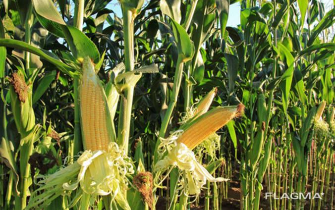 Купівля зернових та олійних культур