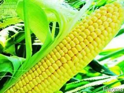 Куплю дорого кукурузу