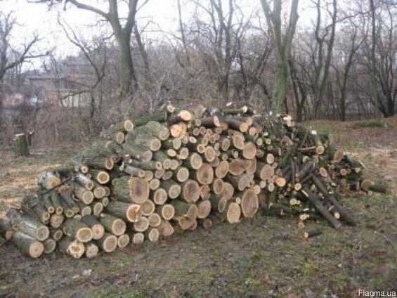 Куплю дрова на постоянной основе