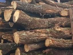 Куплю дрова твердих порід