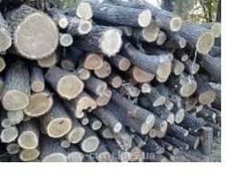 Куплю дрова твердих порід (Дуб, ясень, граб, акація ) оптом