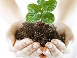 Куплю гербициды, фунгициды Житомир