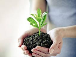Куплю средства защиты растений, гербициды, фунгициды, инсект