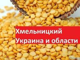 Куплю Горох Хмельницкий Украина