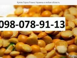 Куплю Горох Житомир Украина