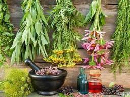 Куплю лекарственные растения