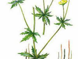 Куплю корни лекарственных растений в сухом или сыром виде.