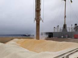 Куплю кукурузу фуражную на экспорт