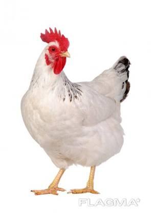 Куплю куриную продукцию-куриной разделки , на постоянной основе