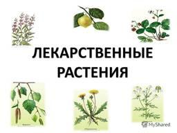 Куплю лекарственные травы