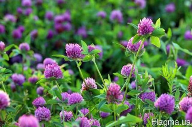 Куплю лекарственные травы, лекарственно-растительное сырье