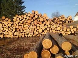 Куплю ліс кругляк