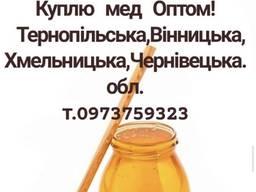 Куплю мед оптом в Тернополі, Хмельницькому, Вінниці та Чернівцях