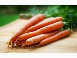 Куплю морковь оптом от 20т