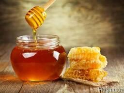 Куплю мёд 2017 года оптом