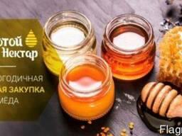 Куплю мёд оптом без антибиотика