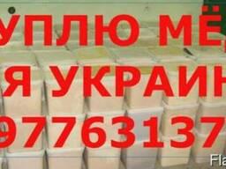 Куплю мёд по Днепропетровская обл. и вся Украина