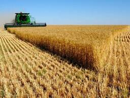 Куплю некондицию зерновых, крупы