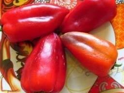 Куплю перец сладкий сортов Лайлак белл, Леся или Камби
