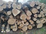 Куплю постійно дуб дрова т/с і сорт D все що є - фото 7