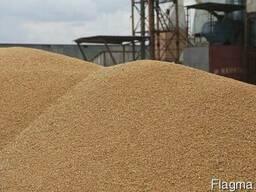 Куплю пшеницу 2, 3 кл
