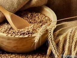 Куплю Пшеницу, Фураж некондиция