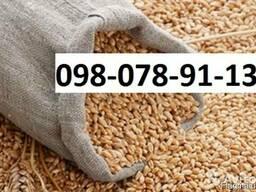 Куплю Пшеницу Ровно любой сорт