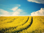 Куплю сельскохозяйственное предприятие - фото 1