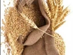 Куплю рапс, сою, горох, пшеницу