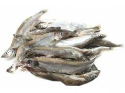 Куплю Риба свіжоморожена мойва, минтай