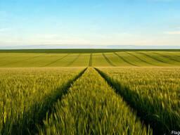 Куплю сельскохозяйственное предприятие