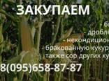 Куплю пшеницу, фураж , кукурузу. - фото 2