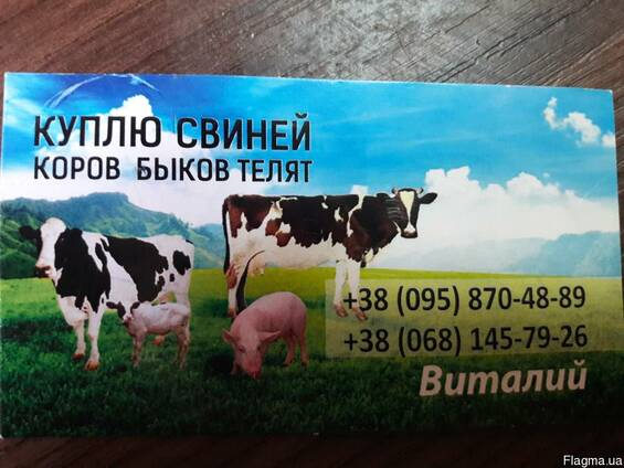 Куплю свиней, коров, быков, телят. В любых количествах.