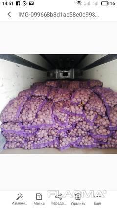 Куплю товарный картофель, картошку