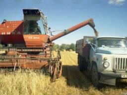 Куплю урожай зерновых!