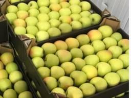 Куплю свежие груши и яблоки на экспорт - фото 2