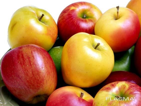 Куплю яблоко оптом