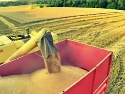 Куплю ячмень, пшеницу 1. 2. 3. классы и фураж.