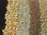 Куплю зерно оптом, без посредников