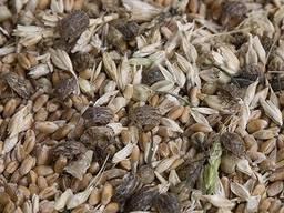 Куплю зіпсоване, некондиційне зерно для технічних потреб