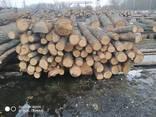 Куплю постійно дуб дрова т/с і сорт D все що є - фото 1