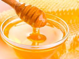 Купую мед оптом в Вінницькій області