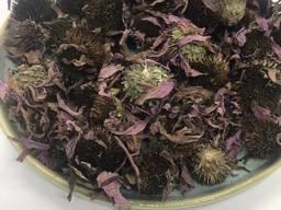Квіти ехінацеї, ехінацея, Эхинацея цветки, цвет