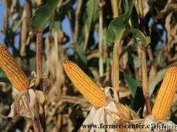 Квс 381 купить кукурузу, квс 381 цена